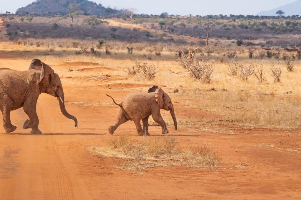 Extraordinary Kenya