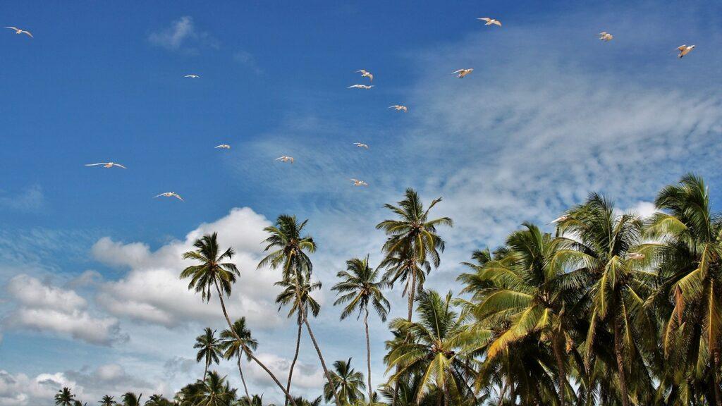 Sri Lanka - Tropical island